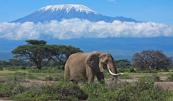 In The Shade of Kilimanjaro - 7 days from $2495
