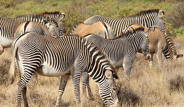 Discover Kenya - 8 days from $2695