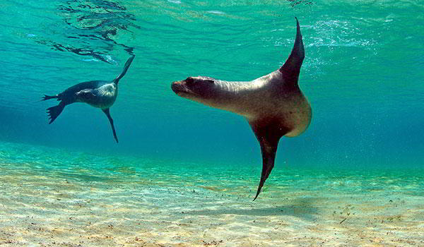 Galapagos Discovery - 7 days from $3695