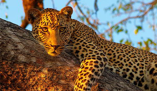 Exciting Cape & Big Five - 7 days from $1095