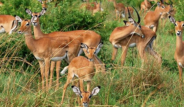 Tanzania Landscape - 9 days from $5295