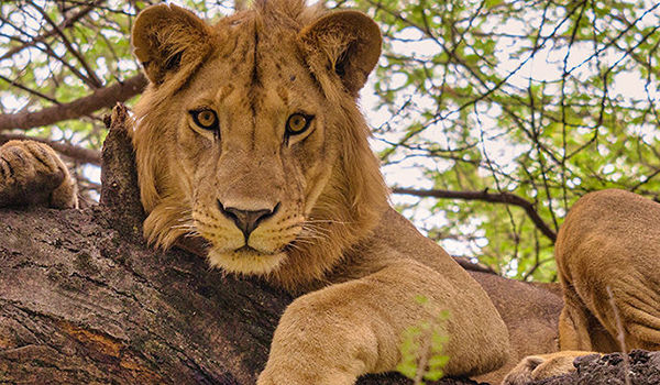 Treasures of Tanzania - 10 days from $5295