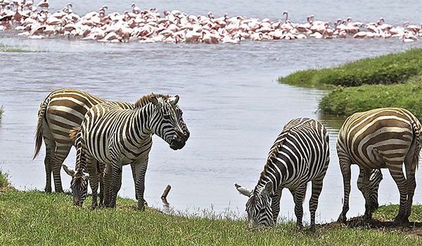 Magic of Kenya - 7 days from $2395